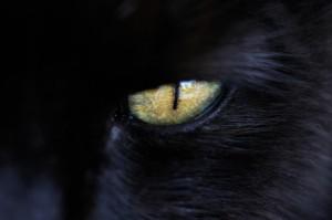 das magische Auge eines schwarzen Katers