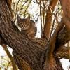 Katze, die sich im Baum tarnt