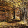 mit gelben Blättern übersäter Waldpfad