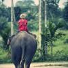 Elefant mit Thailänder auf dem Rücken reitet in die Ferne